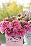 Bos van roze chrysantenbloemen royalty-vrije stock fotografie