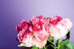 Bos van roze rozen Stock Afbeeldingen