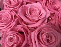 Bos van roze rozen royalty-vrije stock foto's
