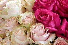 Bos van roze rozen Royalty-vrije Stock Afbeeldingen