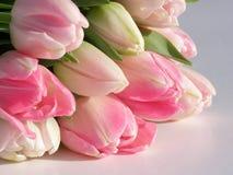 Bos van roze tulpen stock fotografie