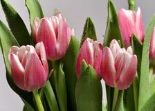 Bos van roze tulpen met dauw Stock Foto