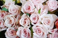 Bos van rozen Royalty-vrije Stock Afbeeldingen