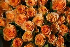 Bos van rozen Stock Foto