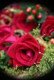 Bos van rozen Stock Fotografie