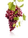 Bos van sappige rode druiven Stock Afbeeldingen