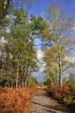 Bos van Sille in Frankrijk stock fotografie