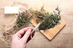 Bos van thyme in vrouwelijke hand Royalty-vrije Stock Afbeelding