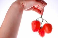 Bos van tomaten in één hand van een meisje Royalty-vrije Stock Afbeelding