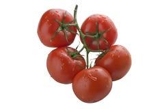 Bos van tomaten Royalty-vrije Stock Afbeeldingen