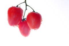 Bos van tomaten op de witte achtergrond Stock Foto