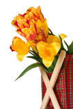 Bos van tulpen Stock Fotografie