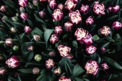 Bos van tulpen Stock Foto
