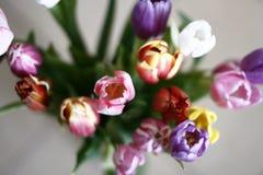 Bos van tulpen Stock Foto's