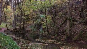 Bos van verloren zielen Stock Foto's