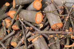 Bos van vers gezaagd brandhout Stock Foto