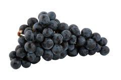 Bos van verse blauwe druiven Royalty-vrije Stock Fotografie