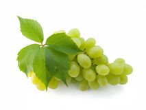Bos van verse druiven Stock Afbeelding