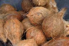 Bos van verse kokosnoten Stock Foto's