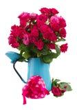 Bos van verse mauve rozen Royalty-vrije Stock Foto's