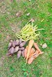 Bos van verse organische groenten die op het gras liggen stock afbeelding