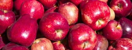 Bos van Verse Organische Rode Appel Royalty-vrije Stock Afbeelding