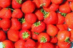 Bos van verse rode aardbeien. Royalty-vrije Stock Afbeelding