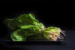 Bos van verse spinazie Royalty-vrije Stock Afbeeldingen