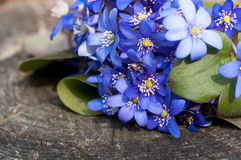 Bos van viooltjes royalty-vrije stock foto's