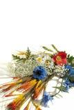 Bos van wilde bloemen Royalty-vrije Stock Foto's