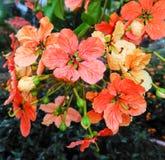 Bos van wilde bloemen Stock Foto's