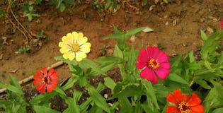 Bos van wilde bloemen Stock Afbeeldingen