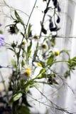 Bos van wilde bloemen Stock Afbeelding