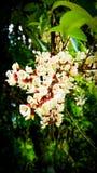 Bos van wildflowers mooi landschap stock fotografie