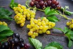 Bos van witte druiven en andere soorten bessen, groene bladeren met waterdalingen op de donkere concrete achtergrond Selectieve n Stock Afbeelding