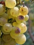 Bos van witte druiven (macro) Stock Foto's