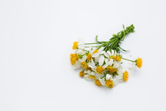 Bos van witte grasbloemen op wit Stock Foto