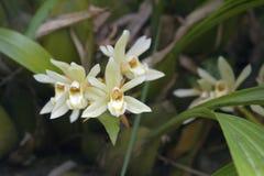 Bos van witte orchidee op grijze achtergrond Royalty-vrije Stock Foto