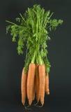Bos van wortelen Royalty-vrije Stock Afbeeldingen