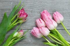 Bos van zachte roze tulpen Stock Afbeelding