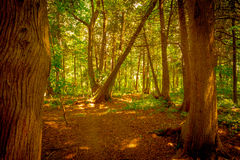 Bos voor de Bomen Stock Foto's