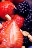 Bos vruchten - bessen royalty-vrije stock afbeelding