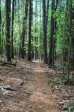 Bos wandelingssleep door bomen met niemand Royalty-vrije Stock Foto