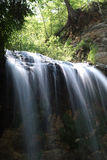 Bos waterval Stock Foto's