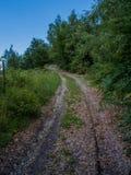Bos weg Stock Foto
