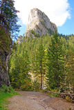 Bos weg aan ceahlau rotsachtige berg Royalty-vrije Stock Foto's