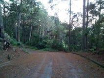 Bos weg bij Koh Mak stock foto