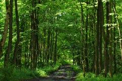 Bos weg bij Koh Mak Stock Foto's