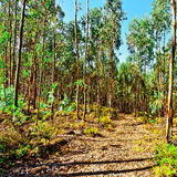 Bos weg bij Koh Mak Royalty-vrije Stock Afbeelding