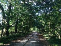 Bos weg bij Koh Mak Stock Afbeeldingen
